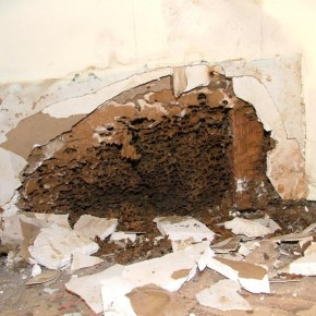 Building damage caused by ants